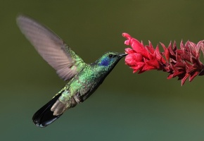Hummingbird bathroom set